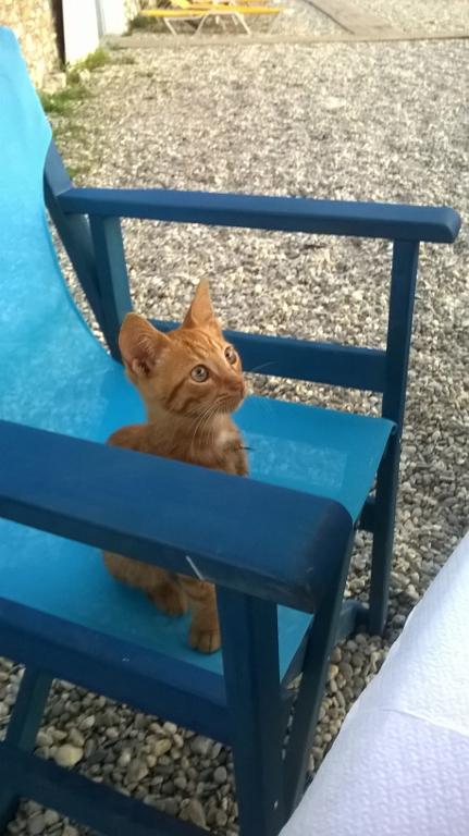 The kitten wanted my dinner - Το γατάκι ήθελε το φαγητό μου